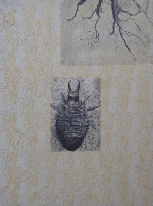 mierenleeuw1998-60-x-80